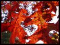 Autumn_fall_leaf_16264_l